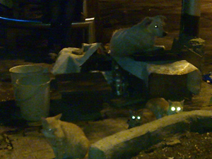 dog+cats