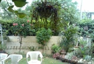 hibuscus rain