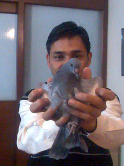 Rajinder and the pigeon